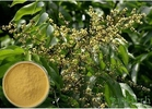 Soapnut Saponin Cosmetic Raw Materials Soapberry Extract For Whitening Spot